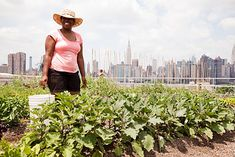 Rooftop farm Karen Turner, a farm apprentice, wants to return to Texas to farm full-time.