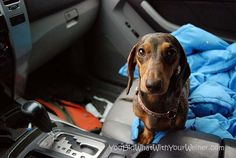 Can you put on my seatbelt? I would but I have no thumbs.....
