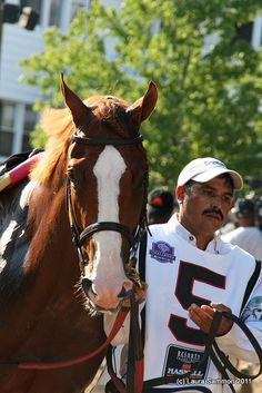 Shackleford-one of my favorite racehorses ever!!!