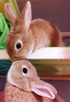 kissing bunnies | PicsVisit