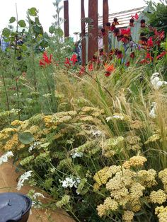 Perennial Planting at Royal Horticultural Society Tatton Flower Show by Anca