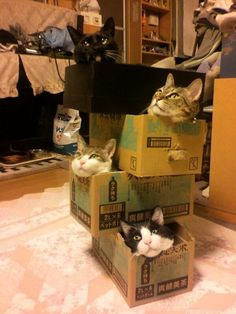 Cats in a tower of boxes