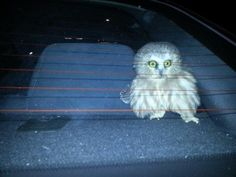 This owl, who has seen some stuff, man… | 61 Images Of Animals That Are Guaranteed To Make You Smile