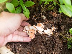 Herb Garden, Garden Beds, Vegetable Garden, Garden Plants, Garden Tools, Old Milk Jugs, Pot Plante, Potting Soil, Plantation