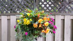 begonia & impatiens hanging basket