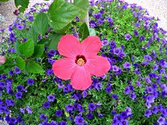 More beautiful ideas for container gardening flowers! 20 recipes to recreate the looks in your own yard, patio or porch.