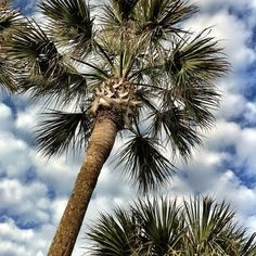 Palms & clouds