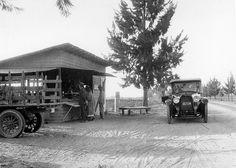 Knott's original berry stand, Buena Park, circa 1926