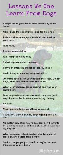 Lessons we can learn from dogs quotes animals dogs dog life lessons pets I Love Dogs, Puppy Love, Cute Dogs, Awesome Dogs, Schnauzers, Bichon Havanais, Happy Birthday Dear, Funny Birthday, Birthday Bash