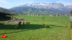 #goatlife #buchs #switzerland Tinder Dating, Man Projects, Next Video, Best Youtubers, Dolores Park, Beautiful Places, Life