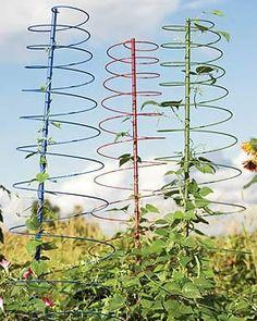 Colorful Coil Plant Support ,Plantlive Plant Support Co. Vine Trellis, Garden Trellis, Starting A Vegetable Garden, Veg Garden, All About Plants, All Plants, Outdoor Projects, Garden Projects, Creative Landscape