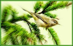 Γη και Ελευθερία.: Τραγούδι στὸν ἥλιο. Poetry, Animals, Animales, Animaux, Poetry Books, Animal, Animais, Poem, Poems