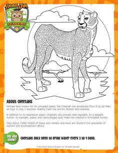Cheetah | Animal Jam Academy
