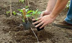 August Gardening Checklist real estat, garden checklist, weed, august garden