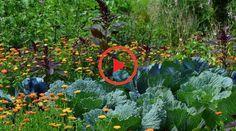 Für diejenigen, die dies noch nicht gesehen haben, schauen Sie es sich an. Forest Garden, Edible Plants, Woodland Garden