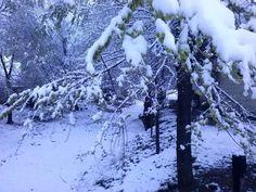 Emite secretaria de gobernación declaratoria de emergencia para 22 municipios del estado por nevadas y heladas   El Puntero