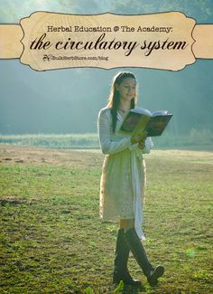 Herbal Education @ The Academy: The Circulatory System | Bulk Herb Store Blog | Interested in herbal education and the heart? Come see what HANE is teaching in their cardiac unit this month on the BHS blog!