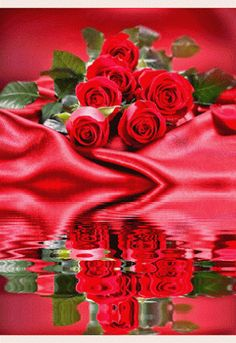 # SEVERAL ROSES #
