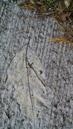 Leaf in sidewalk