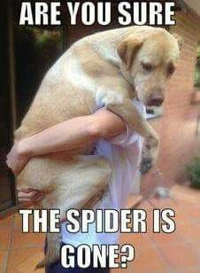 This is just like my biggest dog!!