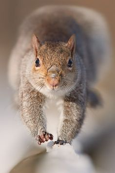 Squirrel - Run to you by Stefano Ronchi on 500px