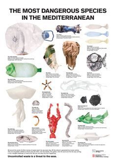 The Most Dangerous Species in the Mediterranean. This infographic examines the most common types of human wastes, how the waste affects the marine life, and how just how long the average lifespan of article is.