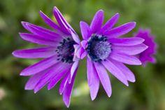la simmetria in natura