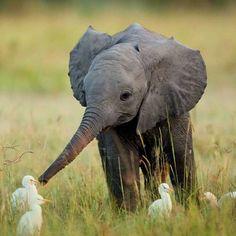 Little elephant making friends