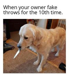 dog - When your owner fake throws for the 10th time. You Funny, Stupid Funny, Really Funny, Funny Stuff, Funny Things, Dank Memes Funny, Dankest Memes, Jokes, Meme Caption