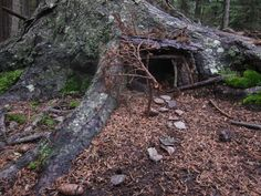 Fairy House in Cathedral Woods (© 2013 Susan Ashley Michael)