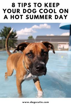 """""""Woe, the summer can get really hot outside!"""" you complain to your buddy as you're sitting by the pool drinking some cold beverage and your pup is staring pleadingly in your direction. Dice Template, Pool Drinks, Pet Stuff, Happy Dogs, Summer Days, Cute Dogs, Beverage, Drinking, Pup"""