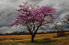 Lonely Redbud by Jerry Bain on 500px