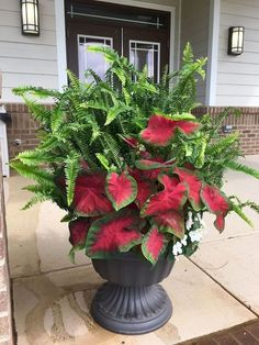 Stylish Amazing Container Flowers Garden Design Ideas For Spring Winter Container Gardening, Indoor Gardening Supplies, Garden Container, Gardening Tips, Gardening Vegetables, Gardening Scissors, Kitchen Gardening, Gardening Services, Gardening Courses