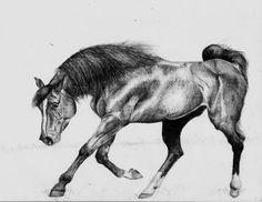 rysunki koni - Szukaj w Google