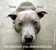 I wish I could post this at the shelter so people coming in to the shelter to leave their dog would think twice. The truth is, over of pit bulls dumped in shelters die. If you dump your pit there, you are likely killing it. Animal Shelter, Animal Rescue, Shelter Dogs, Animals And Pets, Cute Animals, Animals Beautiful, Funny Animals, Amor Animal, Animal Sayings