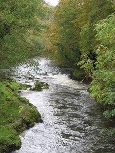 River Teifi, Maesycrugiau River Teifi from the bridge in Maesycrugiau