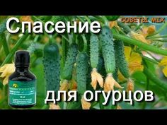 Small Farm, Diet And Nutrition, Rarity, Cactus Plants, Vegetable Garden, Diy And Crafts, Soda, Vegetables, Green