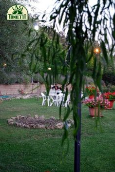 Trunks, Plants, Home, Drift Wood, Tree Trunks, Plant, Planets