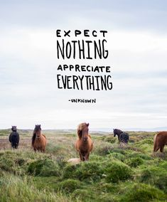 Monday Words: Appreciate Everything