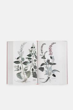 Leonhart Fuchs (1501–1566) was a founding father of modern botany, honored to this day in the vivid flower, and corresponding color, Fuchsia. In 1543, Fuchs combined his botanical knowledge with groundbreaking medical research in The New Herbal: a meticulously illustrated catalog of some 500 types of plants and their healing properties. This fresh reprint is based on Fuchs's personal, hand-colored copy, which has miraculously survived four-and-a-half centuries in pristine condition…