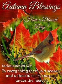 Autumn Blessings Good Morning Everyone, Good Morning Good Night, Morning Morning, Prayer Verses, Bible Verses, Scriptures, Morning Blessings, Ecclesiastes, Have A Blessed Day