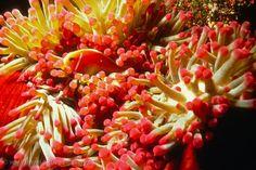 Pictures of Australia - Queensland-0022 - Great Barrier Reef ...