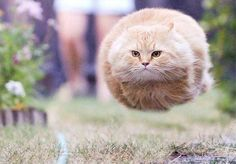 This picture.  I've seen it so many times but it makes me chuckle every time. →猫の脚が消されて、ネコキラー?