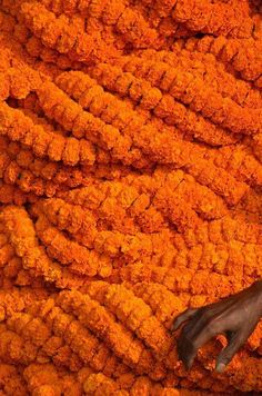 Orange Marigolds at the Flower Market, Calcutta - India Orange Aesthetic, Rainbow Aesthetic, Aesthetic Colors, Calcutta, Orange Wallpaper, Orange You Glad, Orange Crush, Orange Is The New Black, Flower Market