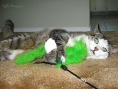CATS - Cracked out Cat 2 by *AJKPhotography on deviantART