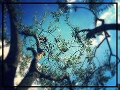 Con gli occhi al cielo!! #casebianche #calabria #castadeglidei #extraverginedioliva #sole☀️