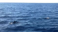 Chasing dolphins Madeira