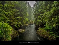 Ann Badjura Photography posted a photo:  Rainy morning at Capilano Regional Park in North Vancouver, British Columbia, Canada  For a larger version please click here: c1.staticflickr.com/5/4263/34742399480_6fc1b8e846_o.jpg  About this photo : Usually a place I love to visit on a hot summer day as it's the perfect place to cool off and escape the heat. This time I went out with my friend on a rainy morning. Everything looked so lush and green and I actually enjoyed a walk in the rain!  It was…