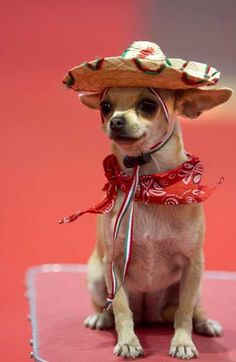 Mexican chi