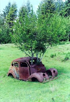 Fort Bragg, United States - Picture by wakitu. Tom was stationed at Fort Bragg Abandoned Buildings, Abandoned Houses, Abandoned Places, Abandoned Vehicles, Derelict Places, Foto Picture, Rusty Cars, Fort Bragg, Growing Tree